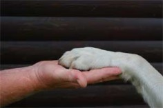 elektronischer Chip, Leinenführigkeit, Coaching Hund