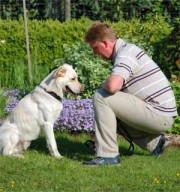 Zertifikat Hundetrainer, Ernährung Hund, Hundeführerschein