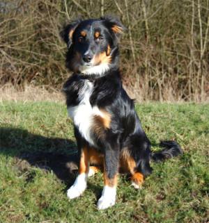 Verhalten Mensch Hund Team, Hundekommunikation, Fütterung Hund